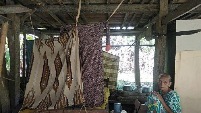 Kisah Nenek Mata Jadi Gembala Sapi, Tinggal di Rumah Tua dan Rawat Dua Saudara yang Sakit
