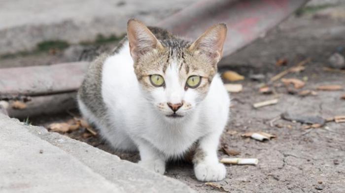 Berapa Usia Kucing Anda Begini Cara Menghitungnya Tribun Timur