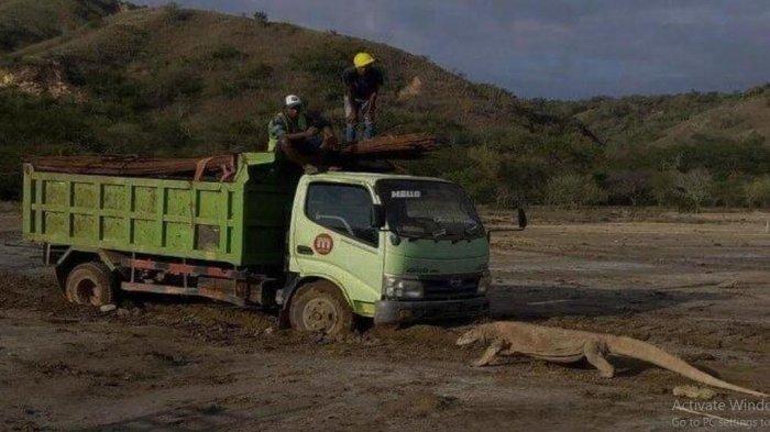 Siapa David Makes? Mau Bangun Geopark 'Jurassic Park' di Taman Nasional Komodo, Sempat Viral Kemarin