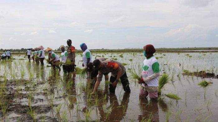 Kementerian Pertanian RI Maksimalkan Lahan di Dadahup Kapuas Dukung Food Estate