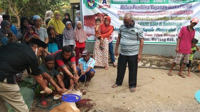 UMI Berkurban 3 Ekor Sapi di Desa Binaan Tamangapa Pangkep