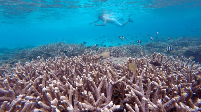 Pulau Kodingareng Keke Makassar