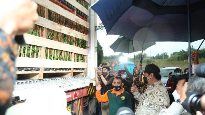 Di Bawah Guyuran Hujan, Menko Perekonomian dan Mentan Lepas Ekspor Tanaman Hias di Bogor Jawa Barat