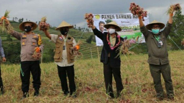 Mentan Syahrul Yasin Limpo Panen Bawang Merah di Bantaeng