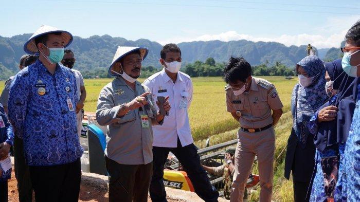 Mentan Syahrul Yasin Limpo Tinjau Produksi Pertanian di Pangkep
