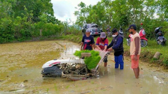 Bupati Enrekang Bersama Petani Desa Patondon Salu Tanam Padi dengan Rice Transplanter