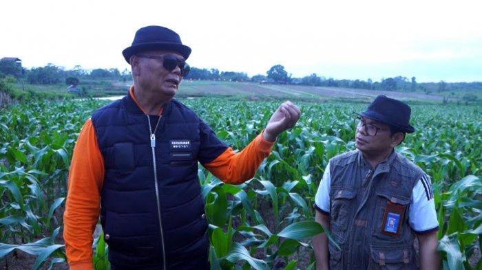 FOTO; Bupati Enrekang Berdayakan 20 Hektar Lahan Tidur - muslimin-bando-memperlihatkan-lahan-jagung-yang-menjadi-destinasi-agrowisata-2.jpg