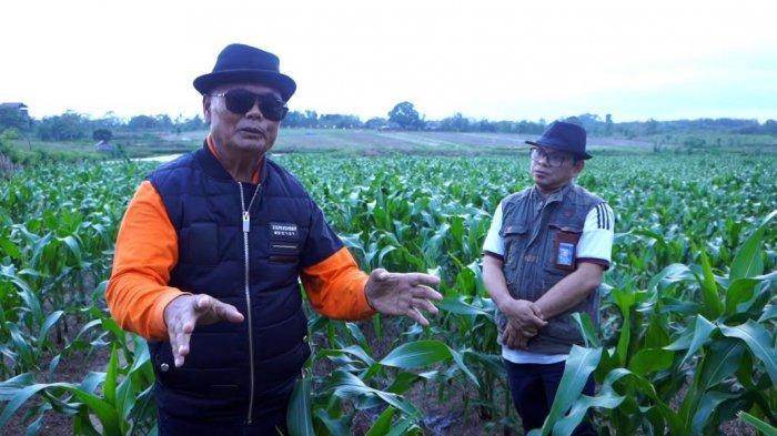 FOTO; Bupati Enrekang Berdayakan 20 Hektar Lahan Tidur - muslimin-bando-memperlihatkan-lahan-jagung-yang-menjadi-destinasi-agrowisata-3.jpg