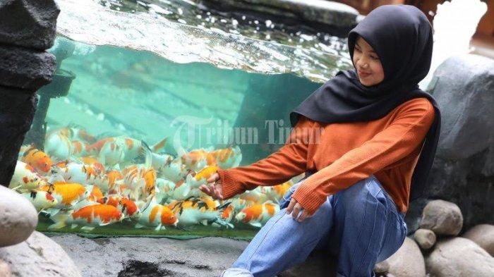 FOTO; Ikan Koi Jadi Daya Tarik Pengunjung di Reza Cafe - niar-melihat-ikan-koi-yang-berada-di-akuarium-reza-cafe-yang-terletak-di-jl-hertasning-1.jpg