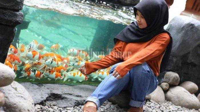 FOTO; Ikan Koi Jadi Daya Tarik Pengunjung di Reza Cafe - niar-melihat-ikan-koi-yang-berada-di-akuarium-reza-cafe-yang-terletak-di-jl-hertasning-2.jpg