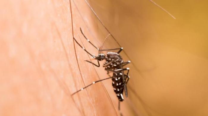 Ini 4 Cara Mudah Usir Nyamuk di Rumah, Pakai Cara Alami Salah Satunya Menanam Tanaman Hias Lavender