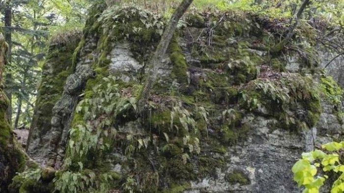 Seorang anggota pasukan elit dari Resimen Pengintaian Khusus bersembunyi di suatu tempat di gambar ini.