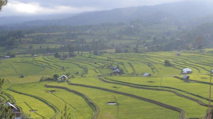 pemandangan-sawah-di-desa-tondokbakaru-mamasa.jpg