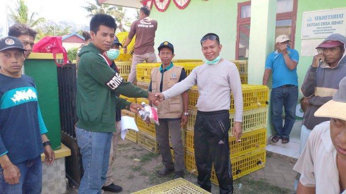 Distribusi Bantuan Ayam, Pakan dan Obat-obatan di Desa Panaikang Pangkep