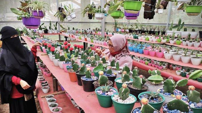 FOTO:  Penjualan Kaktus Mini Meningkat