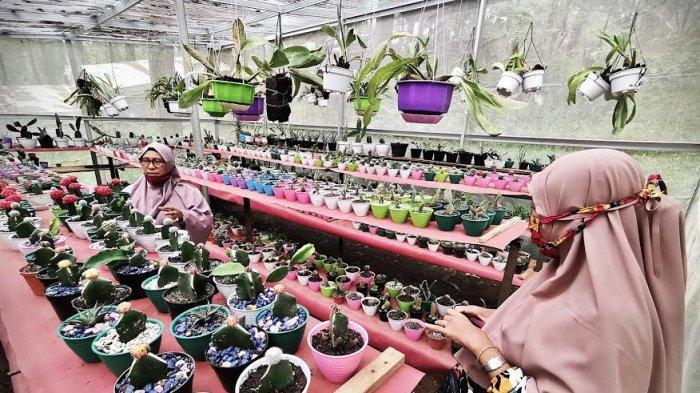 Pembudidaya tanaman hias merawat kaktusnya di kawasan hutan Pinus Malino Gowa Senin (28122020). Penjualan tanaman kaktus mini yang dijual dengan harga Rp 25 ribu per batang hingga Rp 1.5 juta tersebut mengalami peningkatan seiring kembali maraknya hobi menanam bunga di tengah pandemi COVID-19. tribun timurmuhammad abdiwan