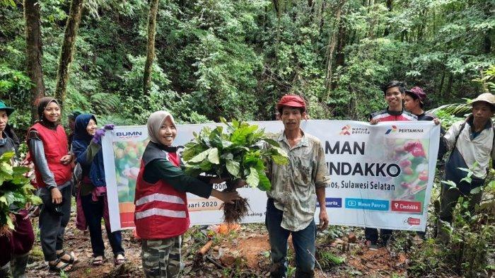 Pertamina dan Petani Dusun Cindako Maros Tanam 22 Ribu Bibit Kopi