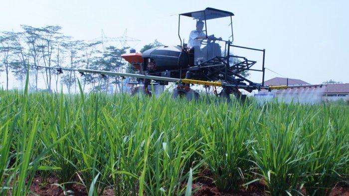 Pengamat: SYL Lakukan Upaya Serius Capai Pertanian Modern dan SDM Berpendidikan
