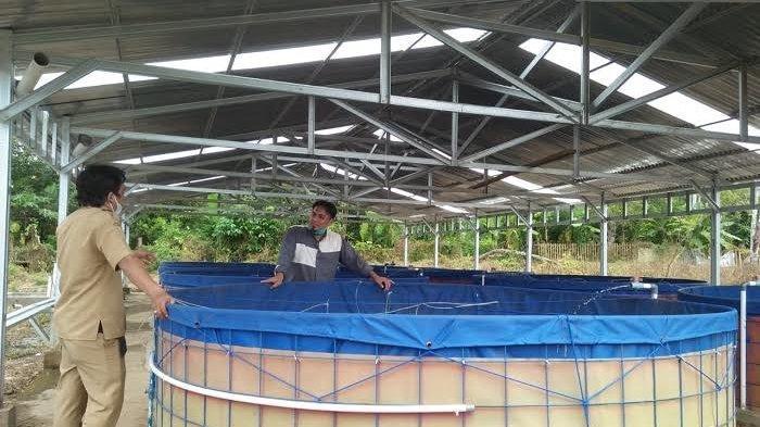 Bupati Sinjai Harap Pesantren Darul Istiqamah Mandiri dengan Budidaya Ikan Nila