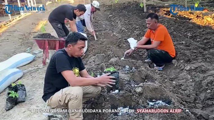 Tips Budidaya Porang ala Pendiri Sekolah Porang Sidrap Syaharuddin Alrif, 1 Pohon Hasilkan 4 Kg Umbi