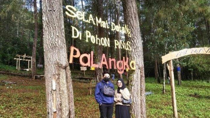 Cerita Pemuda Palangka Sinjai Ubah Daerah Texas Jadi Desa Wisata Pohon Pinus