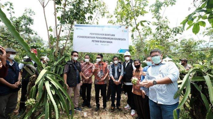 PLN Beri Bantuan Rp 70 Juta untuk Petani Buah Naga Sinjai