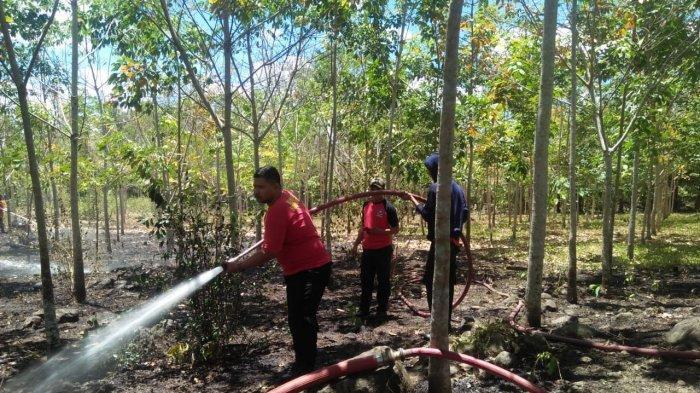 Kebun Karet Milik Warga Desa Balong Bulukumba Terbakar