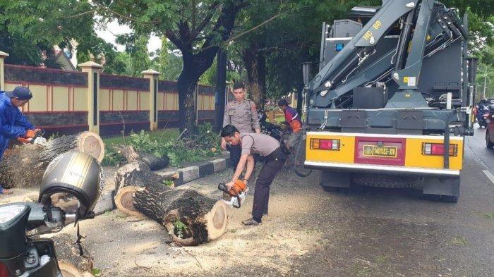 Pohon di Depan SPN Batua Tumbang, Personel Ditsamapta Polda Sulsel Evakuasi