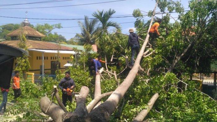 Evakuasi Dua Pohon Tumbang di Sengkang, Satu Personel Damkar dan Penyelamatan Wajo Terluka