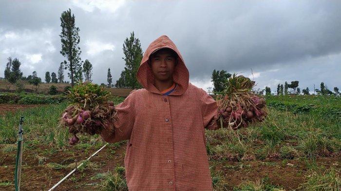 Harga Kentang di Bantaeng Naik, Bawang Merah Anjlok