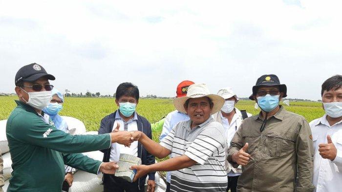 Petani Subang Sumringah, Gabah hasil Panen Lansung Dibeli di Lokasi Rp 4.400/Kg