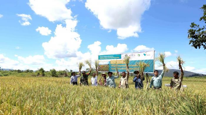 Hasil Panen Petani di Libukan Lutim Meningkat
