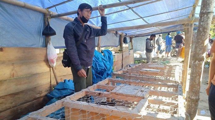 Jelang Lebaran, Harga Ayam Kampung di Mamasa Naik Jadi Rp 100 Ribu per Ekor