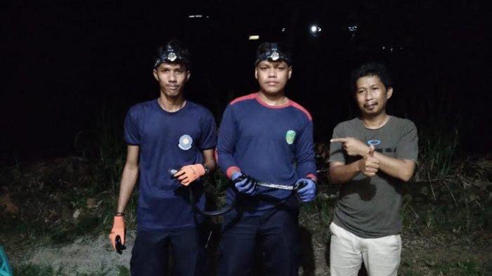 Petugas Damkar Luwu Timur Tangkap Ular Hitam di Kompleks Bunker PT Vale