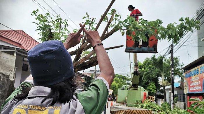 FOTO: Pohon Tumbang Tutupi Jalan Meranti Makassar