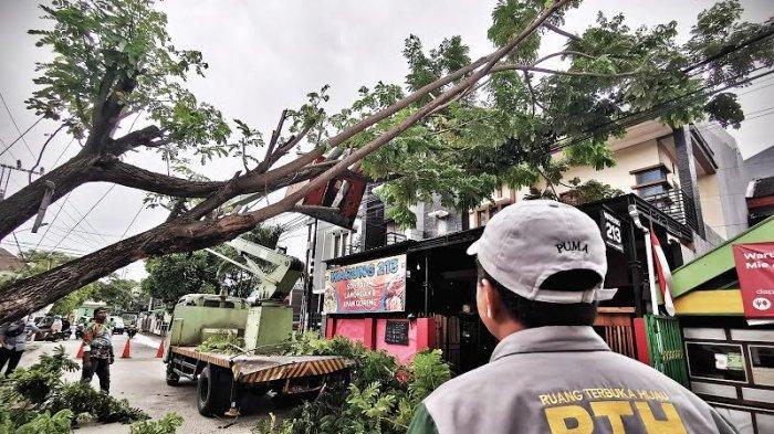 Petugas dari dinas lingkungan hidup kota makassar memotong pohon tumbang yang menutupi badan jalan di Jl Meranti Makassar, Senin (14/12/2020). Pohon tumbang menutupi badan jalan akibat terkena angin kencang disertai hujan mengakibatkan arus lalu-lintas dialihkan sementara. tribun timur/muhammad abdiwan