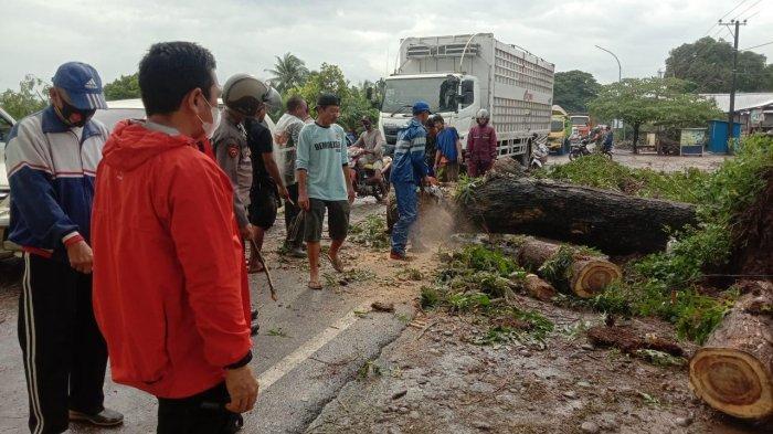 Pohon Tumbang di Poros Gowa-Takalar Telah Dievakuasi