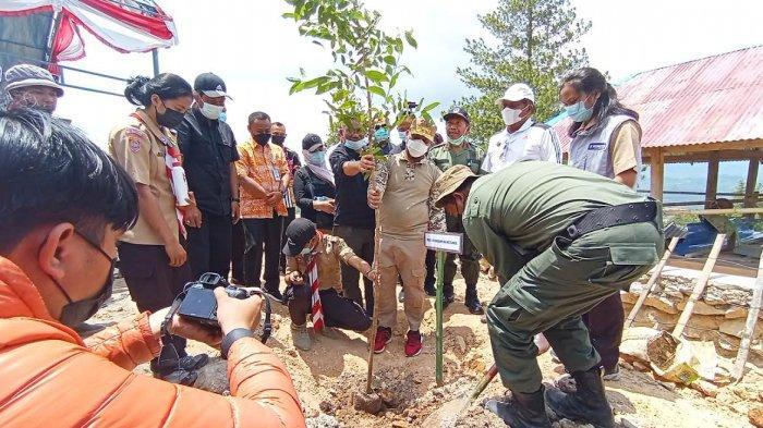 Pohon Kacang Macadamia dan Tabebuya Ditanam Disekitar Bandara Toraja