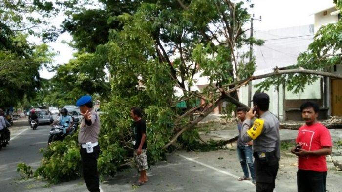 Tebang Pohon Keropos di Jl Dg Ngeppe Makassar