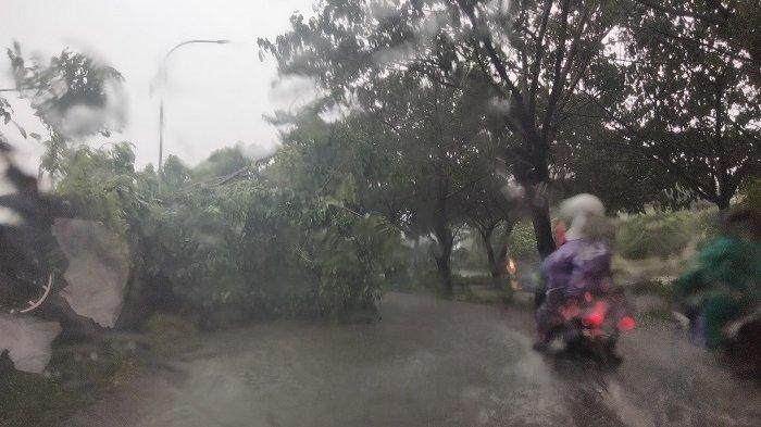 pohon tumbang di Jl Metro Tanjung Bunga akibat cuaca ekstrem di Makassar, Sulawesi Selatan, Jumat (2/4/2021).