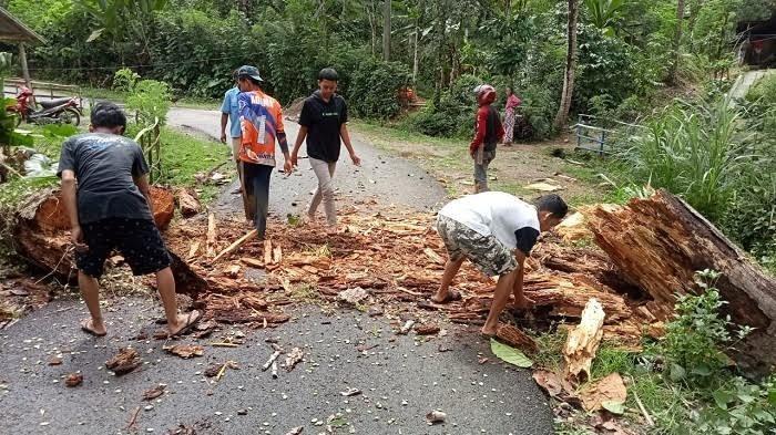 Pohon Tumbang, Aliran Listrik di Puncak Sinjai Terputus