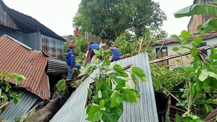 Waspada! Cuaca Ekstrem Parepare Sebabkan 10 Pohon Tumbang, 4 Rumah Tertimpa Hingga Rusak Parah