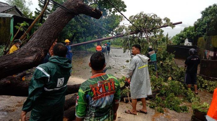 Empat pohon tumbang yang ditanam sejak jaman penjajahan Belanda di Makassar, Sulawesi Selatan, Jumat (2/4/2021).