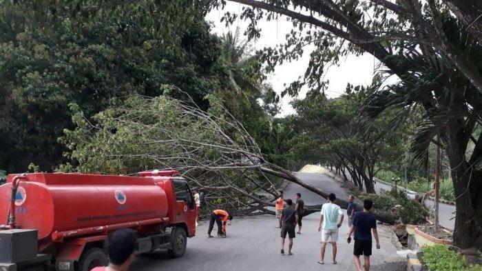 Pohon Tumbang di Enrekang Tutup Akses Jalan Poros Toraja