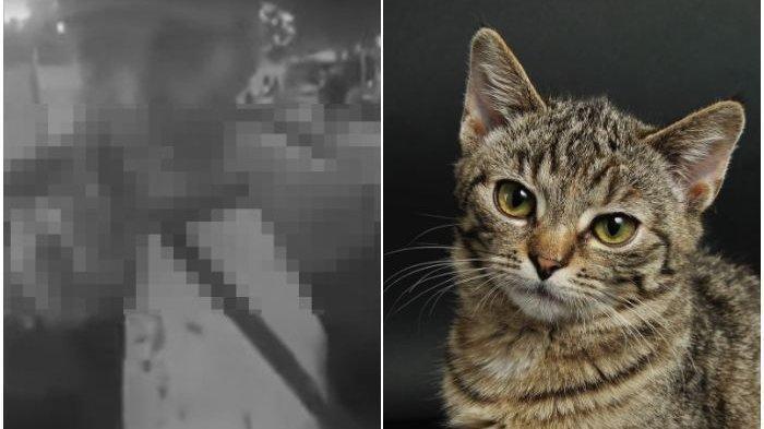 PRIA Makan Kucing Hidup-hidup Viral Ditangkap Polisi, Kaitan Ilmu Hitam Keluarga: Di Rumah Suka Aneh