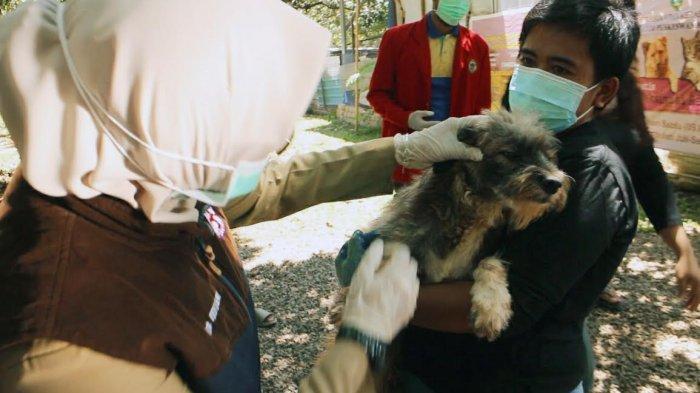 Puskeswan Maros Penyuntikan Vaksin Gratis ke Puluhan Ekor Anjing
