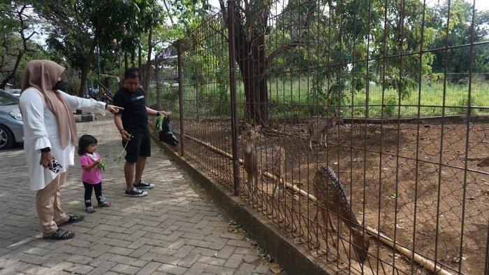 FOTO: Rusa Tutul Unhas, Alternatif Wisata dan Edukasi Warga Makassar - rusa-tutul-di-penangkaran-rusa-kampus-unhas-2.jpg