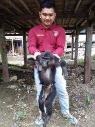6 Monyet Endemik Sulawesi Mati Dibantai di Mamuju Tengah, Ini Kata Direktur LIAR Sulbar
