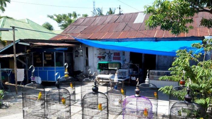 Penjualan Burung di Bone Menurun Drastis Selama Pandemi Covid-19