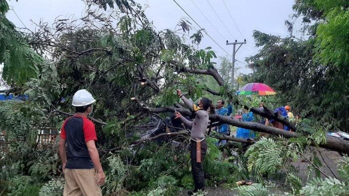 Hujan Deras dan Angin Kencang, Pohon Tumbang Timpa Mobil di Majene